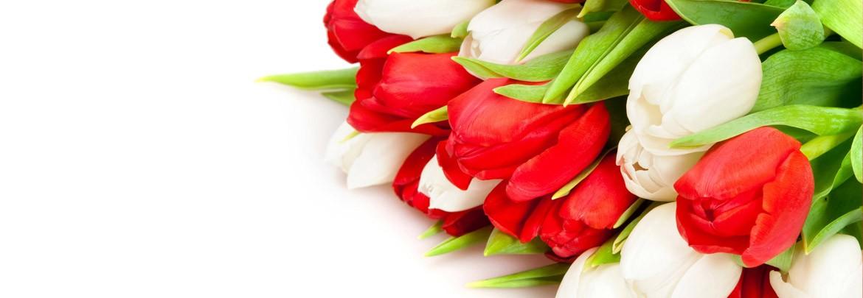 Тюльпаны со скидкой